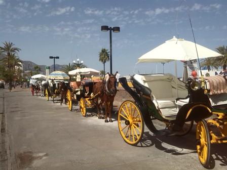 droskhäst spanien, costa del sol hästar, lindahs bllogg, swedish blodie, hårt betslad (1)