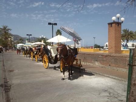 droskhäst spanien, costa del sol hästar, lindahs bllogg, swedish blodie, hårt betslad (2)