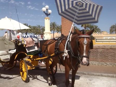 droskhäst spanien, costa del sol hästar, lindahs bllogg, swedish blodie, hårt betslad (3)