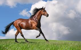 bakåtlutande häst, djurjouren, logisk ridning, lindahs blogg