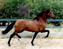 framåtlutande häst, bakåtlutande häst, djurjouren, logisk ridning, lindahs blogg