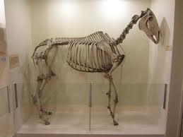 kissing spines, svankande ryttare ger svankande häst, lindahs blogg, djurjouren, logisk ridning, kiropraktik för häst och ryttare
