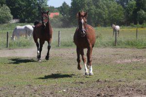 lutande bogar, lindahs blogg, djurjouren (5)