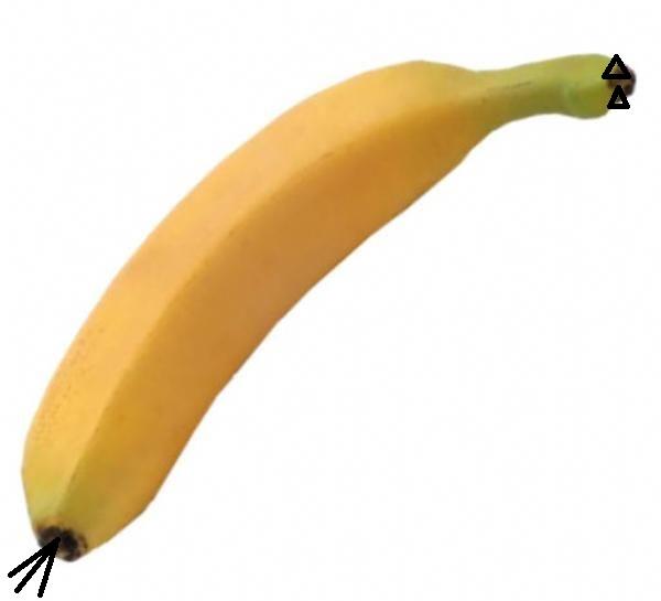 65030-banan_st